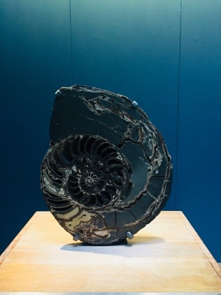 Ammonite in the Natural History Museum, Kensington